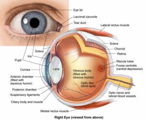 Etiopatogenia retinopatiei diabetice