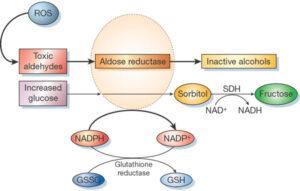 Calea poliol sau calea sorbitol - aldozoreductazei