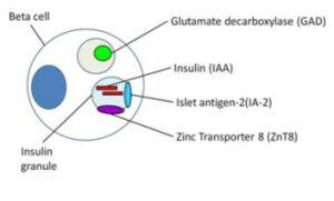 Autoanticorpii din diabetul zaharat tip 1